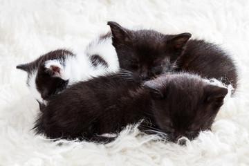 Group of kittens sleeping