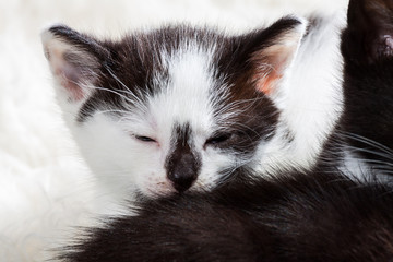 Young kitten falling asleep