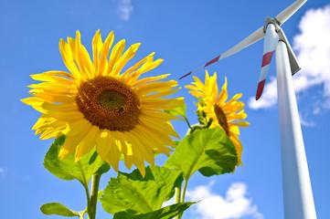 Sonnenblume und Windrad