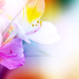 beautiful flowers made with color filters for backgrounds