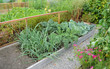 Allotment Gardens