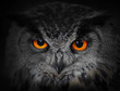 The Evil Eyes. ( Eagle Owl, Bu...