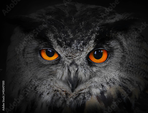 Foto op Plexiglas Uil The evil eyes. ( Eagle Owl, Bubo bubo).