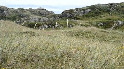 Dünenlandschaft in Skandinavien