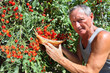 man picking cherry tomato