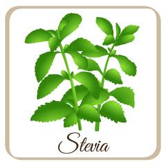 Stevia Vektor
