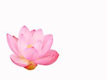 Lotusbloem van fonetische Bellomo