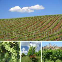 collage with images of green vineyards in spring