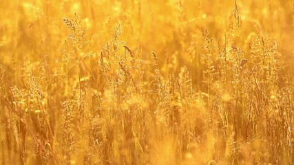 Grass landscape in the wonderful sunset light