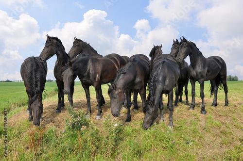 Fototapeten,pferd,tier,hengst,equine