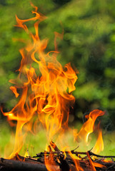 Fire from burning wood