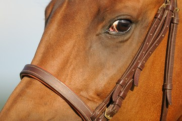 oeil de cheval, regard