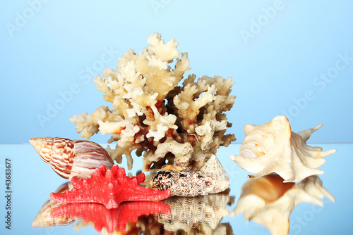 Foto op Plexiglas Cyprus Sea coral with shells on blue background close-up