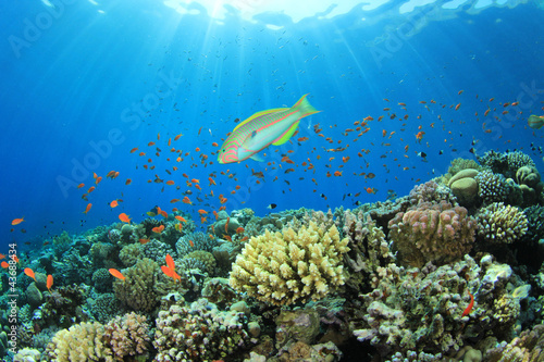 Tropical Fish and Coral Reef Scene