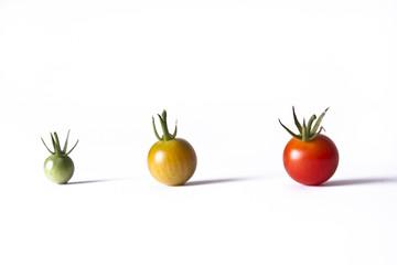 Tomato Life Cycle