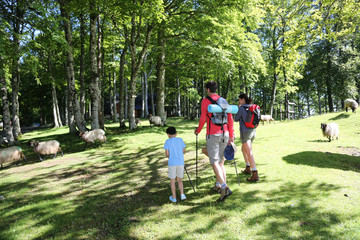 Back view of family walking in mountain forest