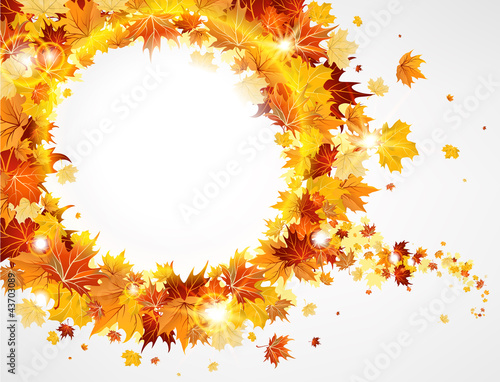 Frame with the beautiful maple leaves