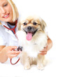 Regular check-ups ensure your pet's health