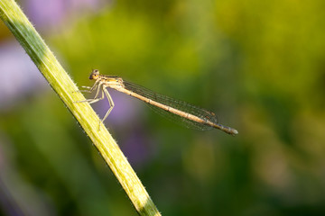 Dragonfly  а the plant