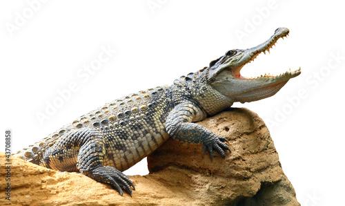 Foto op Aluminium Krokodil The Crocodile.