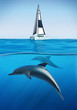 Summer holiday, sailing boat and underwater dolphins