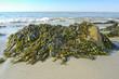 seaweed on a beach and sea