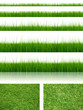 Green, fresh and natural 3d grass  isolated on white