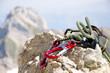 Leinwanddruck Bild - Kletterausrüstung