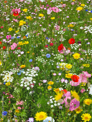 Plakat wild flower on a meadow