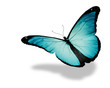 Light blue butterfly flying, isolated on white background