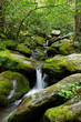 Moss Covered Boulders in a Mountain Stream