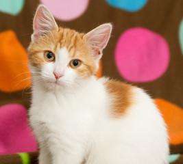Portrait of small cat