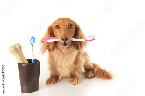 Foto op Aluminium Hond Dog and tooth brush