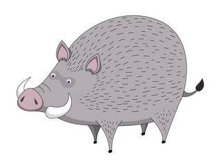 Boar vector