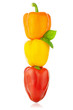 Colored Peppers / Paprika / Isolated on a white background