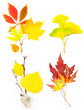 Composition Set of Beautiful Autumn Leaves / isolated