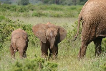 Babyelefant, Baby Elephant in African Savannah