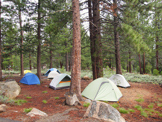 Tents in a Forest