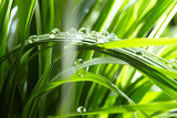 Fototapety water drops on the green grass