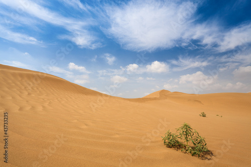 shrub plants in desert