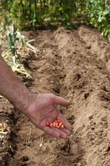 agricultura, semillas