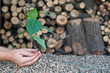 Save the Nature-alternative energy