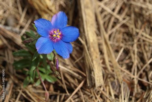Blaue Blüte von oben