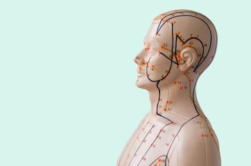 Akupunktur Modell vor hellgrünem Hintergrund