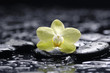 still life with beautiful orchid with stones on wet background