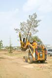 Transplantation of trees poster