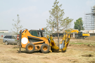 Transplantation of trees