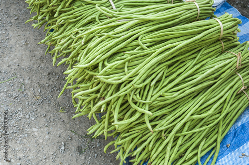 Heap of Yard Long Bean on Sale  at  Farmer's Market.