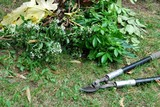 Pruning loppers for gardening and pile of leaves on lawn