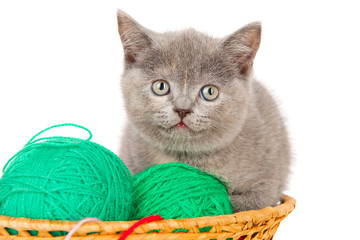 British kitten with a ball of yarn